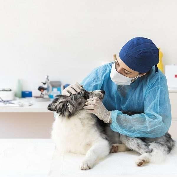 Caso você tenha interesse em fazer a faculdade de Medicina Veterinária, saiba mais.